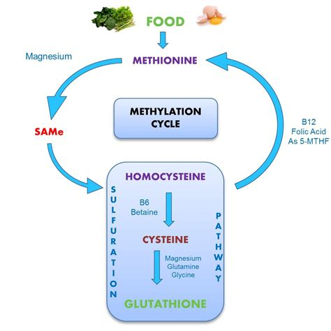 Mthfr And Detox Lyme Bite by 12 Steps To Optimize Your Methylation Process
