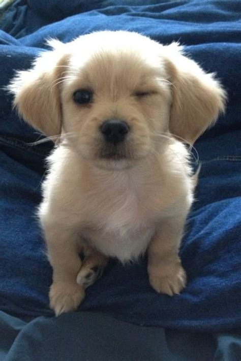 Make Your Day Cutest Pets by Puppies Puppies