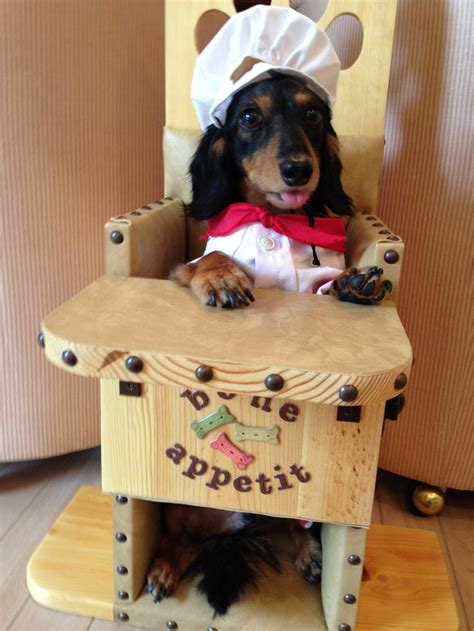 megaesophagus dogs bailey chairs for dogs with canine megaesophagus www baileychairs4dogs canine
