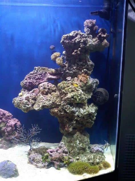 marine tank aquascaping show me your pillars page 3 reef central online