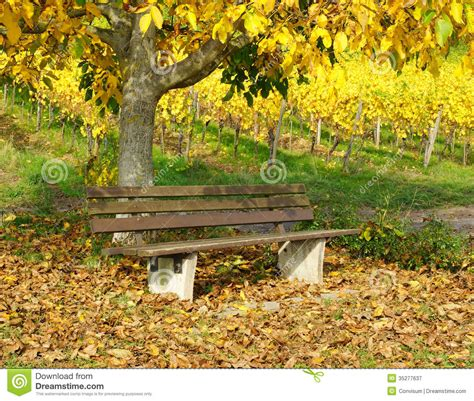 bench under tree wooden bench under tree in autumn royalty free stock