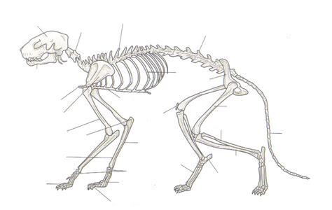 Cat Skeleton Diagram Nivoteamfo