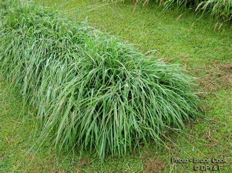 Grass Scientific Name by Factsheet Digit Grass