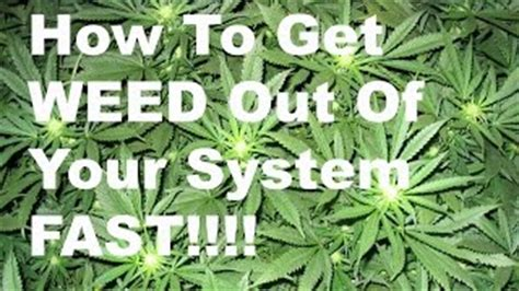 How To Detox Thc Faster by Detox Drugs Out Of System And Detox Florida