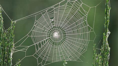 hd web spider web hd wallpaper 1366x768 34011