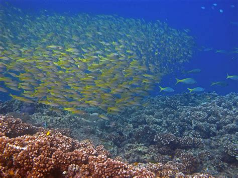 redang dive diving redang island