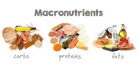 proteinas y grasas digezyme 174 complejo de enzimas digestivas ayuda en la