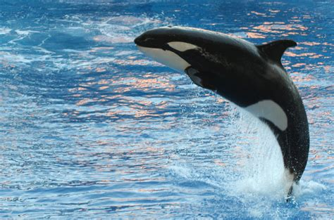 Whale L killer whale dope message board