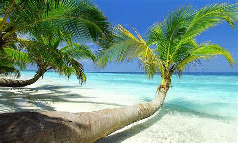 jamaica christmas vacation