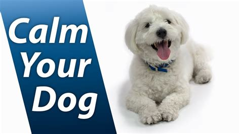 calming sounds for dogs calm your with white noise relaxing sound soothes puppy anxiety fast 10 hours