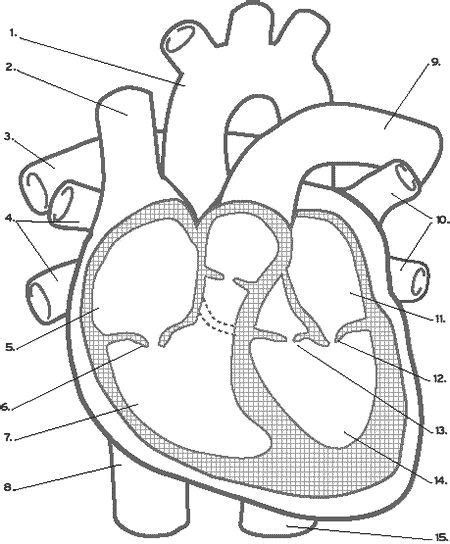 anatomy coloring book ce credits the world s catalog of ideas