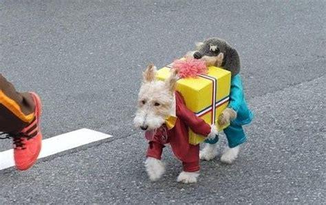 imagenes graciosas de animales en navidad disfraces de navidad graciosos para perros y gatos fotos