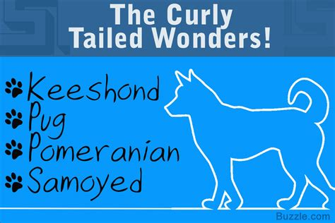 breeds with curly tails 13 adorably breeds that curly tails