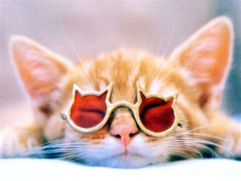 wallpaper cat with sunglasses pics for gt cat wearing sunglasses wallpaper
