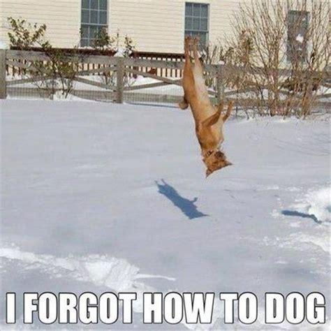 Forgot Meme - i forgot how to dog ned martin s amused