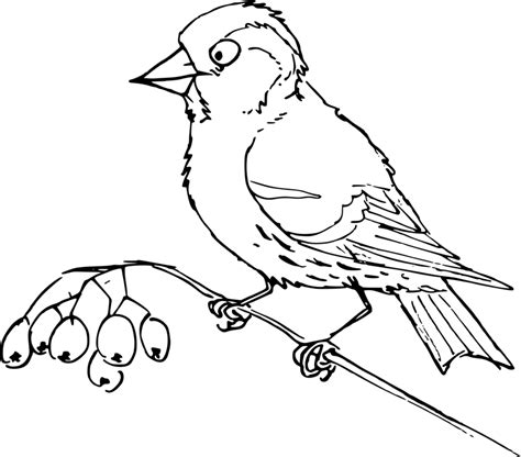 bo on the go coloring pages sketch coloring page