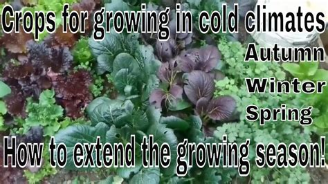 how to grow autumn winter and spring crops cold weather