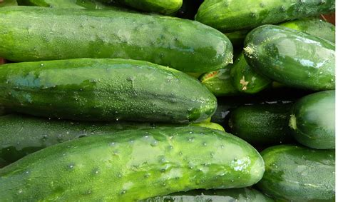 For Cucumbers major damage for cretan cucumber producers from russian embargo cretepost gr