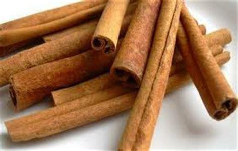 Jual Bibit Kayu Cendana kayu manis jual bibit pohon tanaman