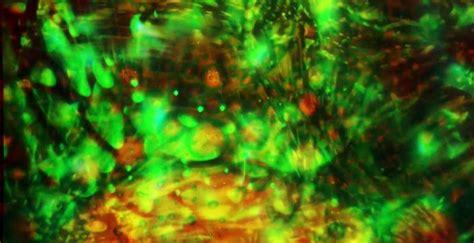 summer of love light show bill ham brings back the summer of love in lights san