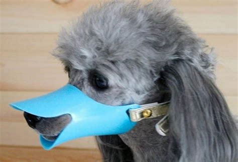 silicone dogs best muzzle keep in in a friendly way