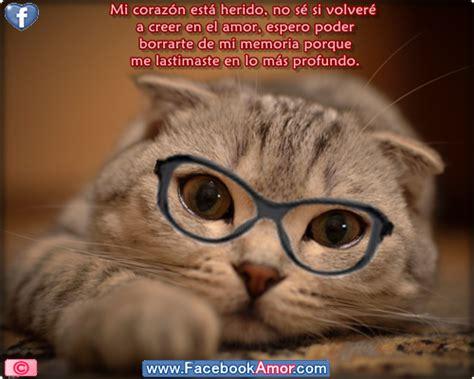 imagenes de gatos tristes con mensajes im 225 genes bonitas de gatos tristes con frases compartir en