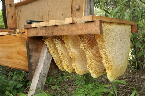 top bar beekeeping supplies top bar bee hives all you can eat gardens