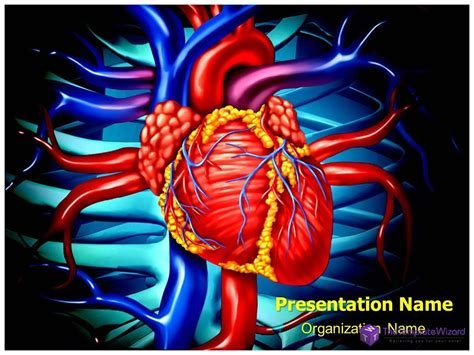 free cardiac powerpoint templates veins anatomy powerpoint template
