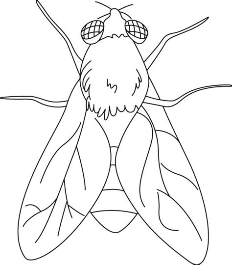 House Fly Coloring Pages Download Free House Fly Fly Coloring Page