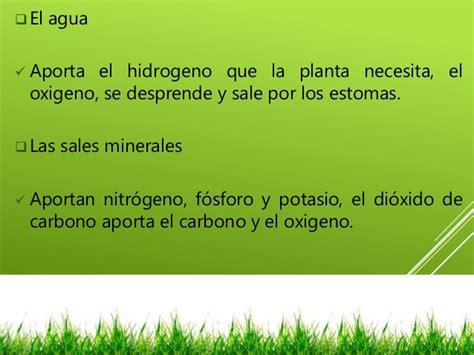 savia biologa y geologa 8467576529 plantas