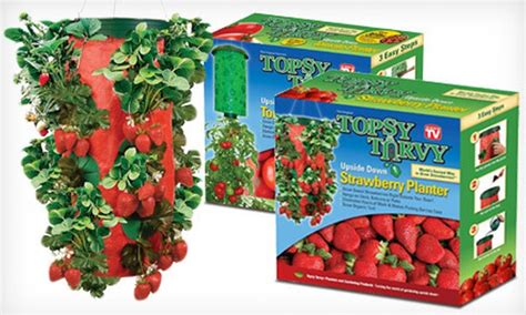 Topsy Turvy Strawberry Planter by 10 For One Strawberry And One Tomato Planter Groupon
