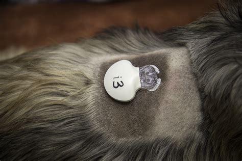 UGA?s veterinary hospital offers take home glucose