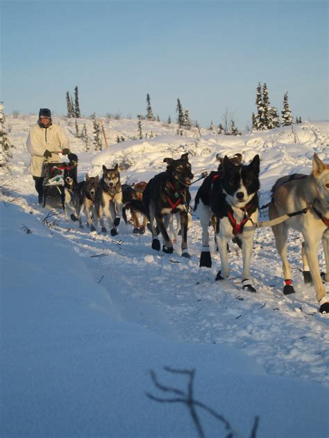 what temperature is cold for dogs cold weather safety for dogs insights from a sled veterinarian dr yin
