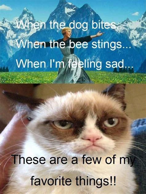 Mean Cat Memes - 17 best images about grumpy cat on pinterest grumpy cat