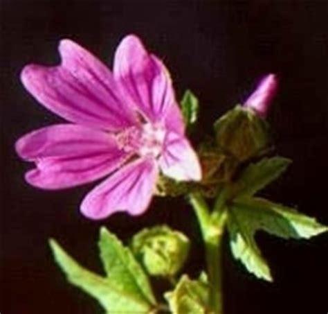 tipi di fiori tipi di fiori fiori di piante