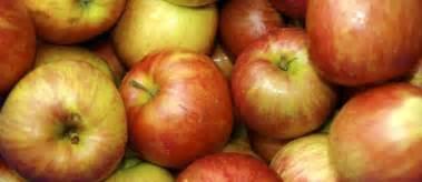recettes de pommes id 233 es de recettes 224 base de pommes