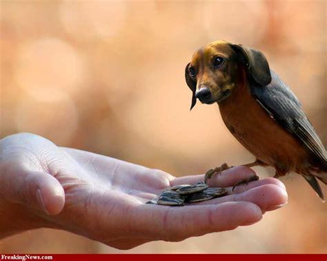what are bird dogs curiositycat the majority the birddog 14
