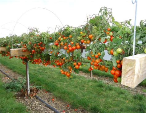 where to find pick your own fruit and vegetable farms