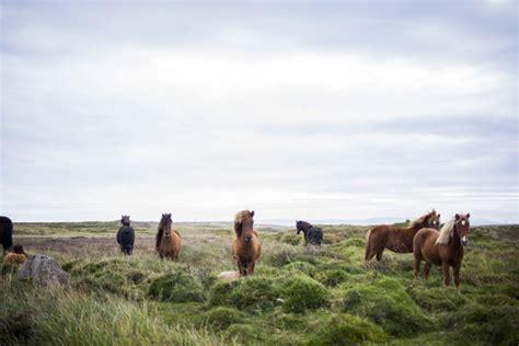 en estado salvaje hermosos caballos en estado salvaje descargar fotos gratis