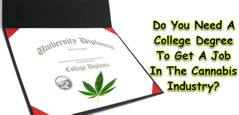 Do You Need A Bachelors To Get An Mba by Do You Need A College Degree To Get A In The Cannabis