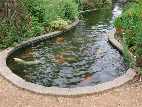 fish pond definition what is