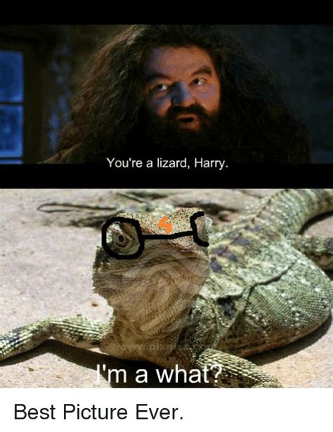 Youre A Whore Meme - you re a lizard harry a what best picture ever meme on