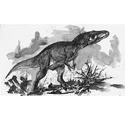 Eocarcharia Pictures &amp Facts  The Dinosaur Database
