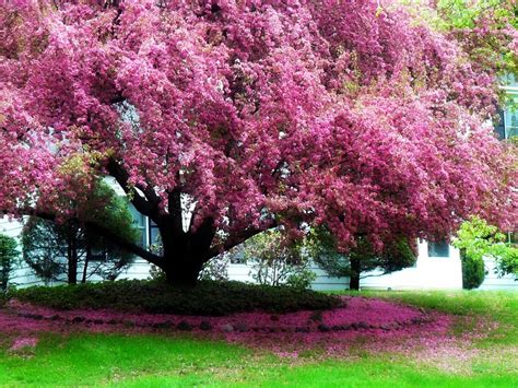 color trees focus the color pink stories from a small