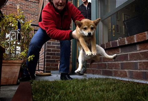 ways to house train a dog are you away often house training a puppy this way our dogs and us
