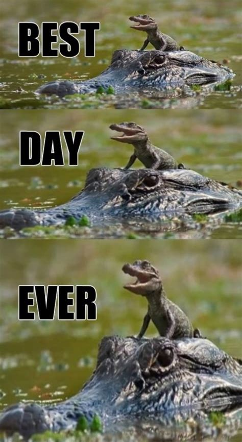 Funniest Meme Ever - image 751299 best day ever know your meme