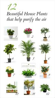 Beautiful House Plants by The Best And Most Beautiful House Plants For Cleaner Air