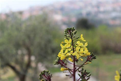 fiori liguria fiori di liguria sprea fotografia