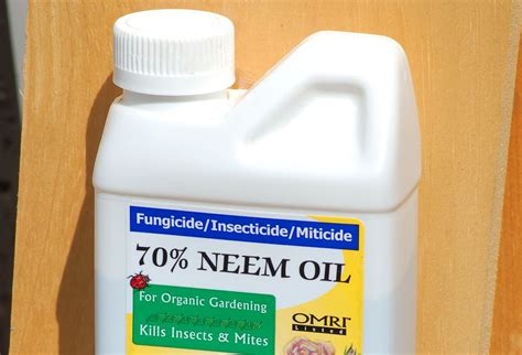neem oil for bed bugs using neem oil as an organic insecticide