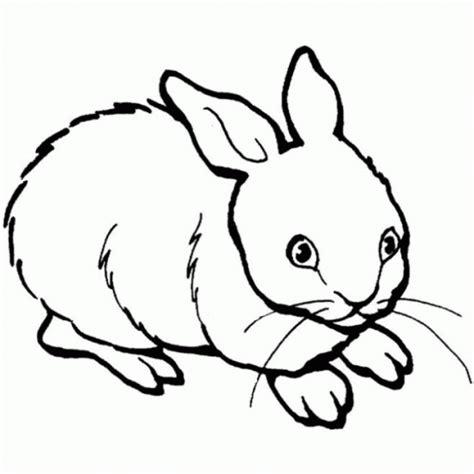 imagenes en blanco y negro tiernas animales domesticos para colorear